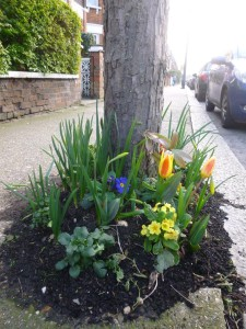 Tree planting Spring
